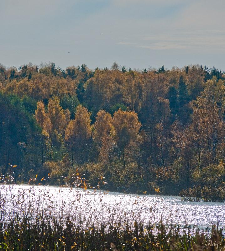 "фото ""Полдень ..."" метки: пейзаж, лес, осень"