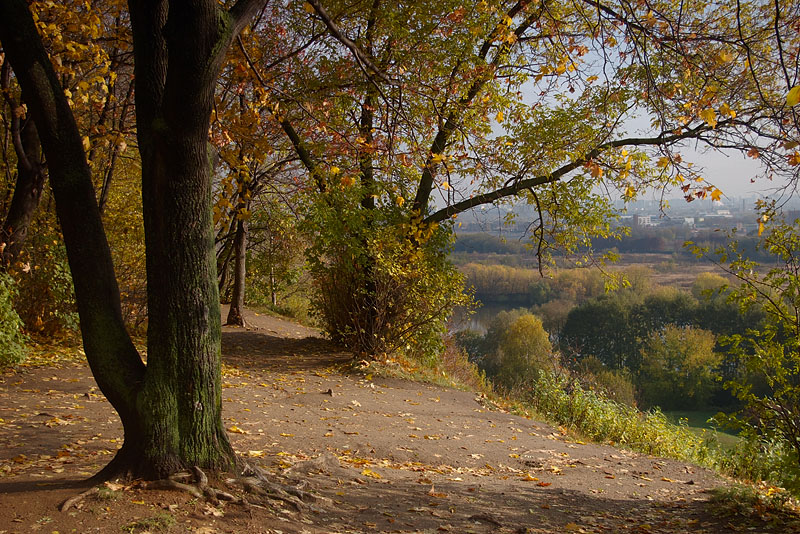 """фото """"Над обрывом."""" метки: пейзаж, осень"""