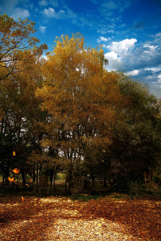 """фото """"Осенним днем играет ветер листьями..."""" метки: пейзаж, осень"""
