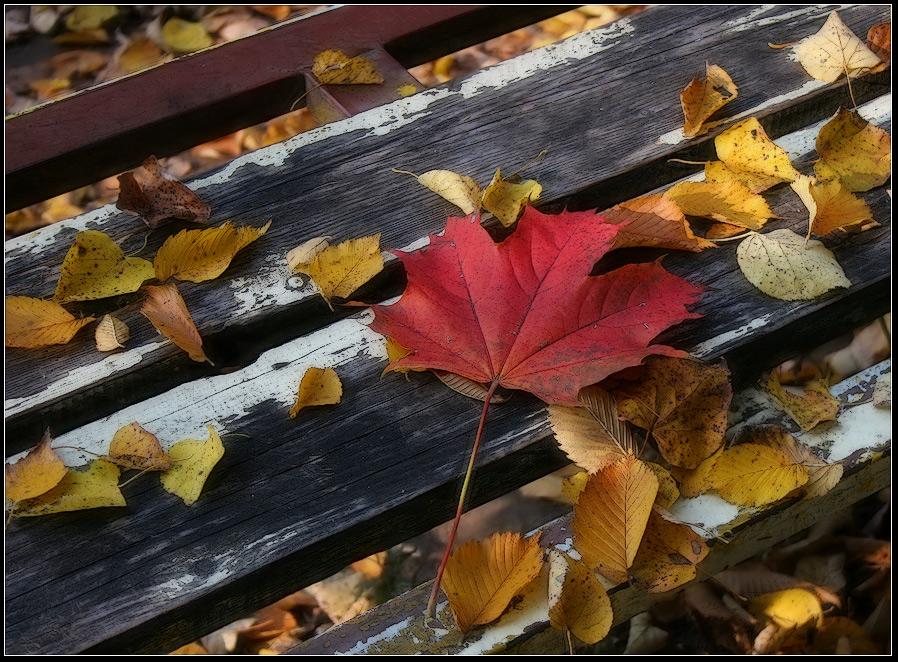 """фото """"в старом парке"""" метки: пейзаж, природа, осень, цветы"""