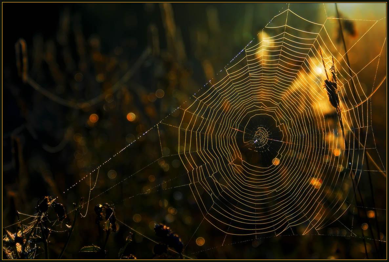 """фото """"Ловушка для солнца"""" метки: разное, макро и крупный план,"""