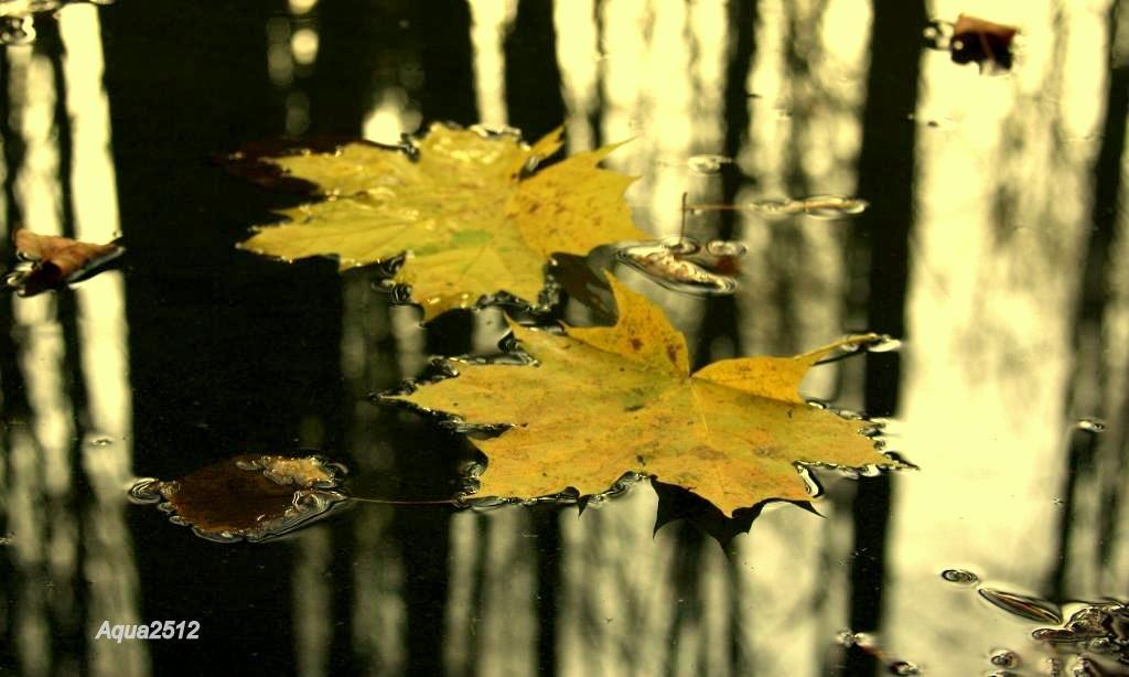 "фото ""зеркало"" метки: природа, разное,"