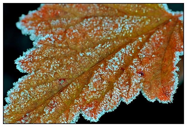 """фото """"Winter is coming"""" метки: природа, макро и крупный план, цветы"""