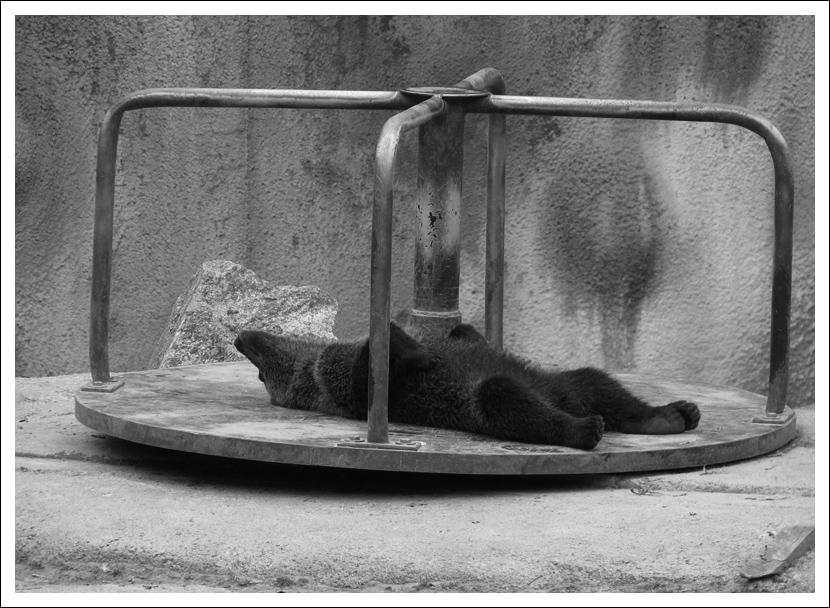 """фото """"and relax..."""" метки: природа, дикие животные"""