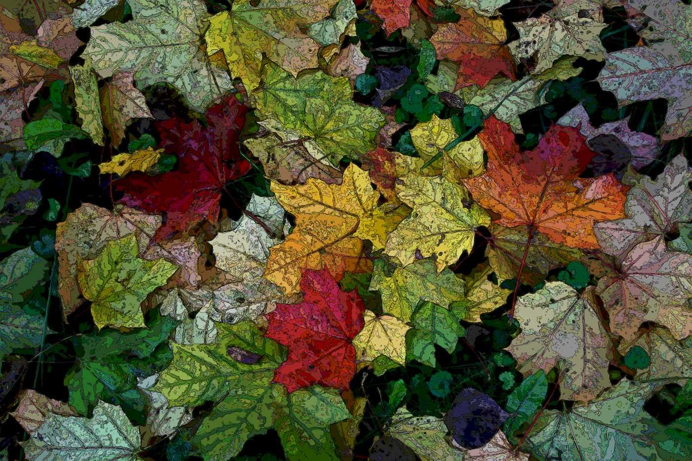 """фото """"Осень соткала ковер"""" метки: макро и крупный план, природа, цветы"""