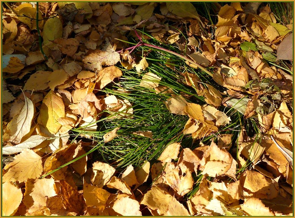 """фото """"не сдаётся"""" метки: пейзаж, лес, осень"""