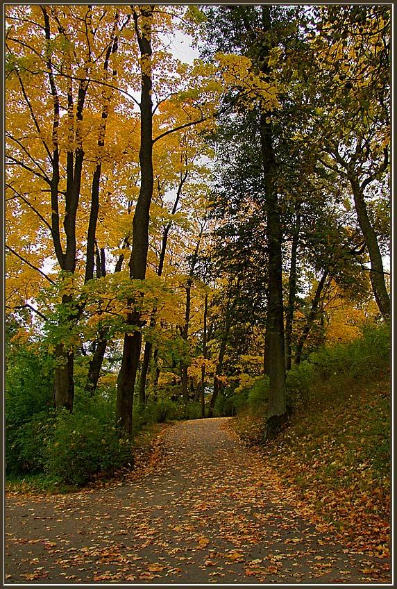"фото ""В парке осень 3"" метки: пейзаж, осень"