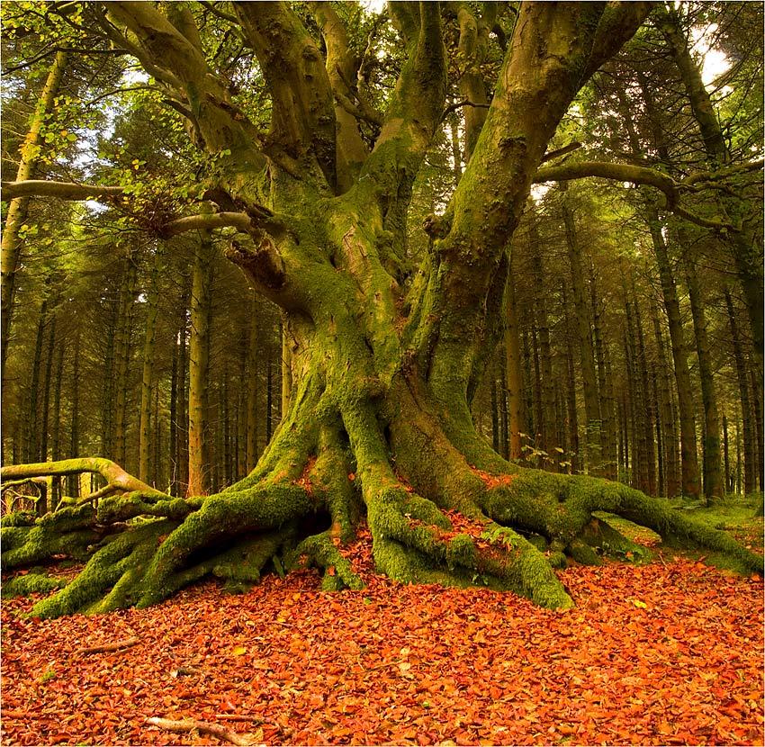 "фото ""Kingdom of the Nature"" метки: природа, цветы"