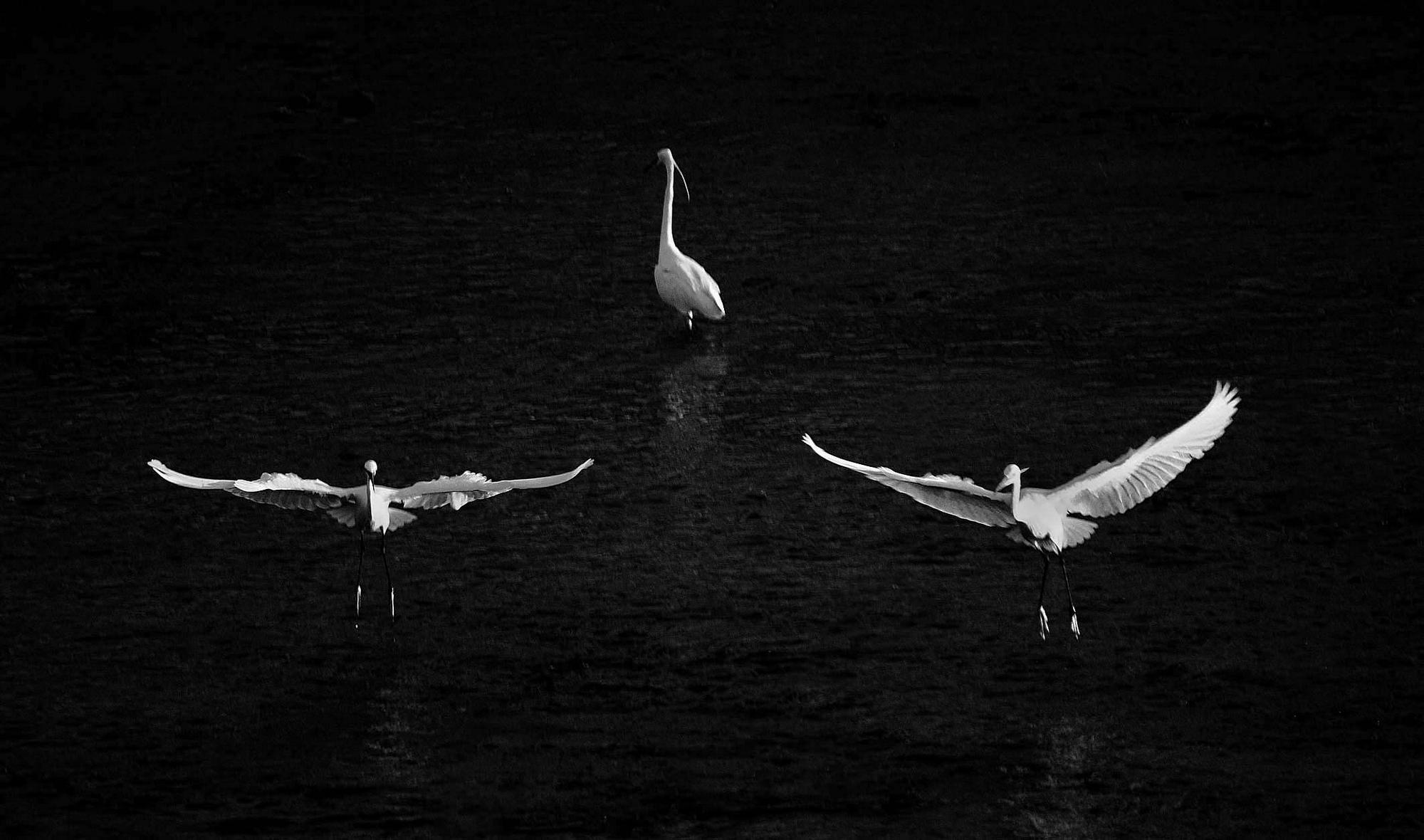 "фото ""Ballet"" метки: черно-белые,"