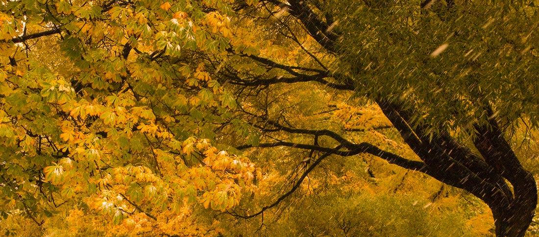 "фото ""Палитра осени"" метки: пейзаж, природа,"