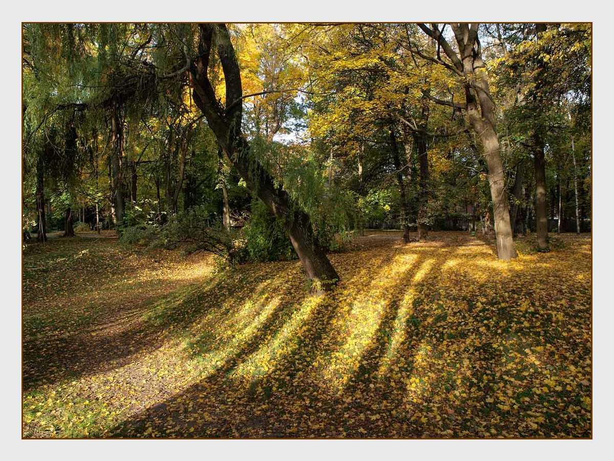 """фото """"Утро в парке"""" метки: пейзаж, лес, осень"""
