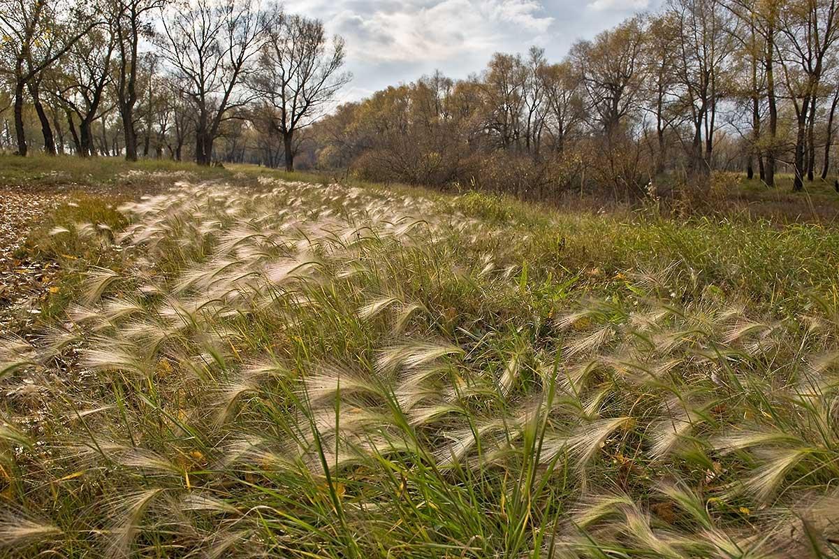 """фото """"Посеребрило"""" метки: пейзаж, осень"""