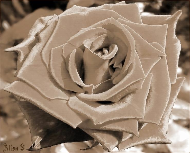 """фото """")-=-("""" метки: природа, цветы"""