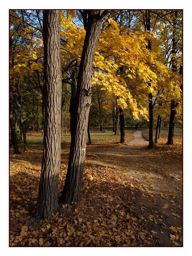 """фото """"Утро в парке 2"""" метки: пейзаж, лес, осень"""