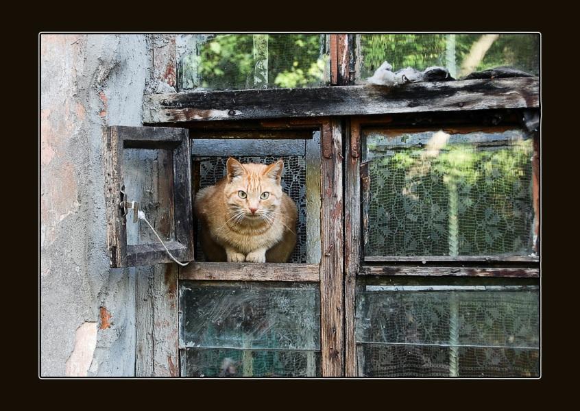 """фото """"Сторожевой"""" метки: природа, разное, домашние животные"""