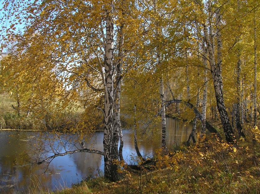 """фото """"Старица"""" метки: пейзаж, лес, осень"""