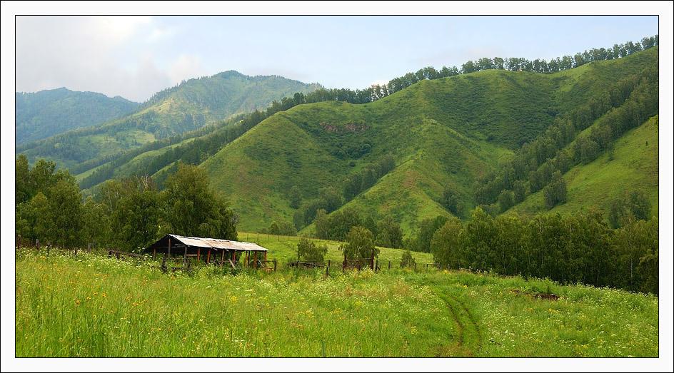 """фото """"По лесной дороге"""" метки: пейзаж, горы, лес"""