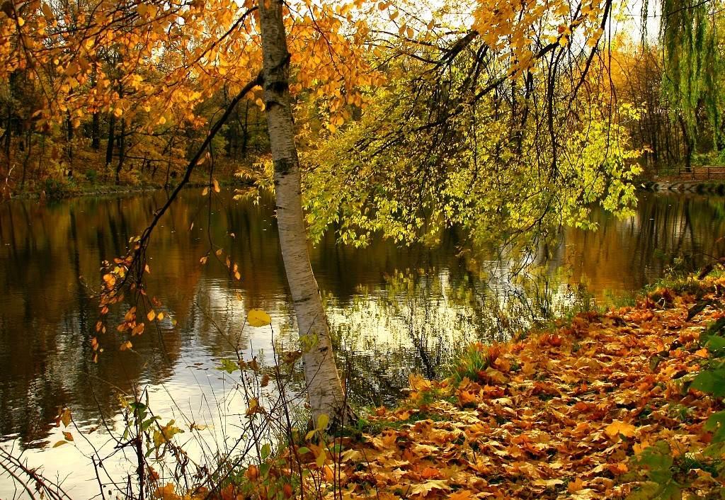 "фото ""на задворках ВВЦ"" метки: пейзаж, вода, осень"