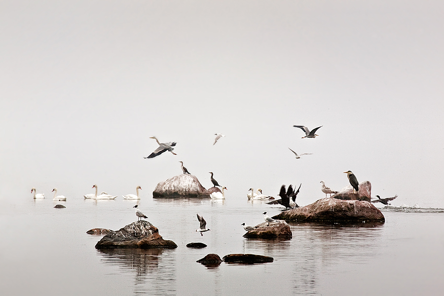 """фото """"Utro"""" метки: пейзаж, вода"""