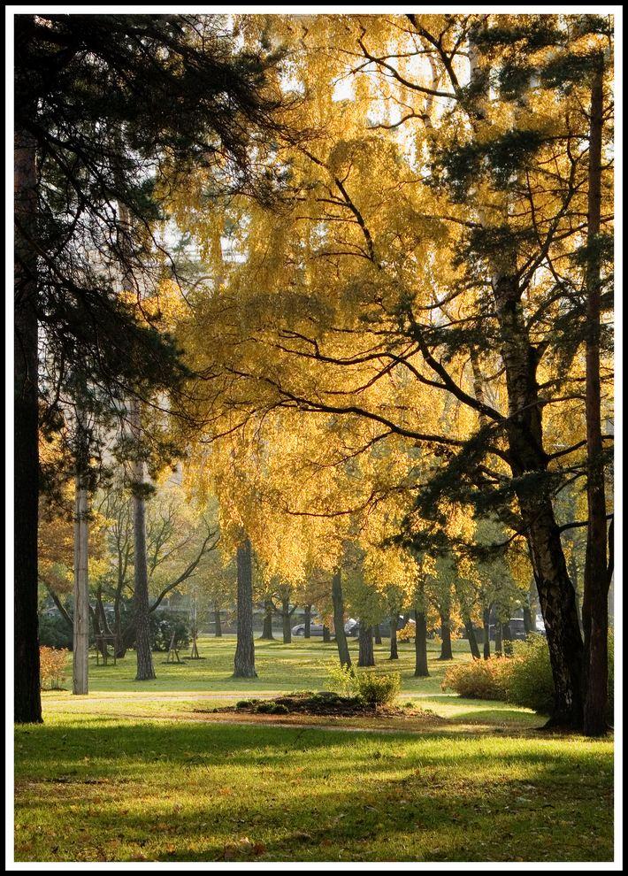 "фото ""Сосновка"" метки: пейзаж, лес"