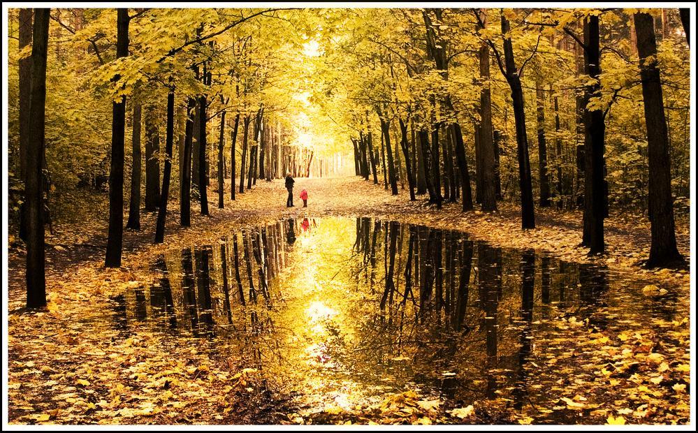 """фото """"Сосновка II"""" метки: пейзаж, лес"""