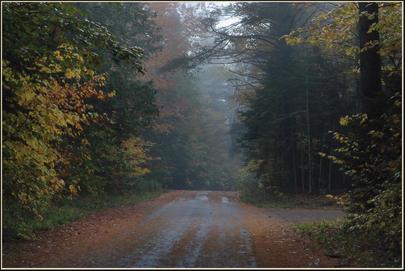 "фото ""Прогулка по дороге, мокрой от дождя."" метки: пейзаж, лес, осень"