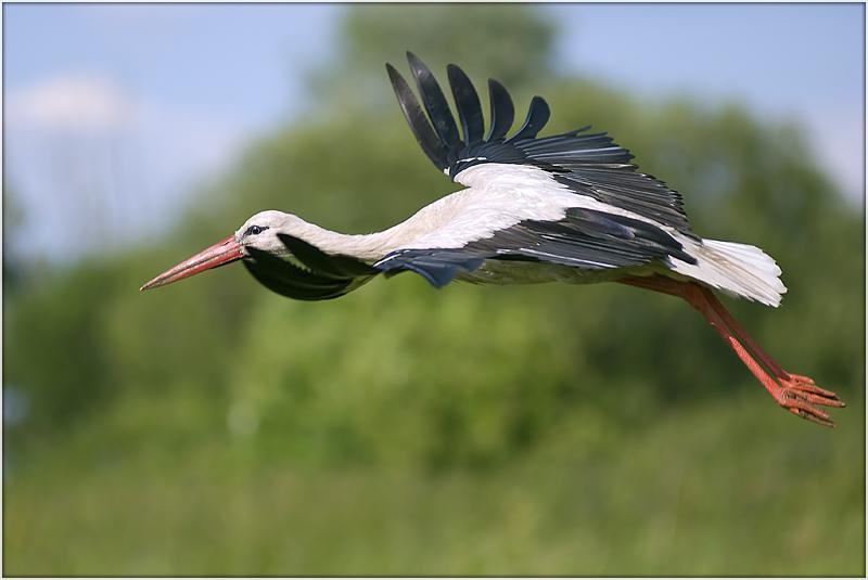 "фото ""на посадку"" метки: природа, дикие животные"