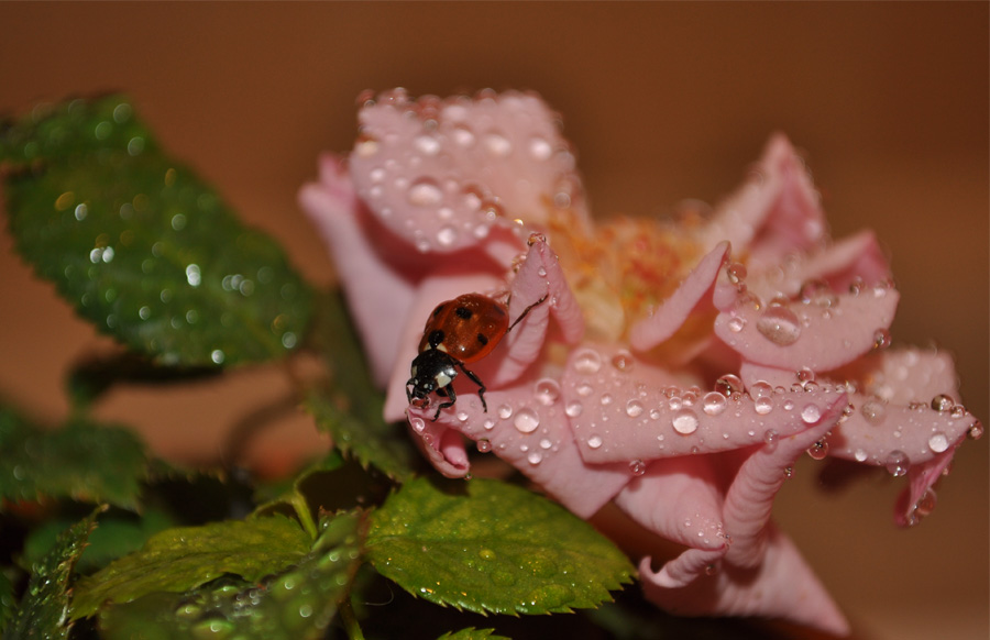"""фото """"Преодоление"""" метки: макро и крупный план, природа, насекомое"""