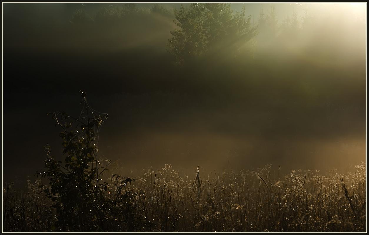 "фото ""Выйти из тени..."" метки: пейзаж, осень"