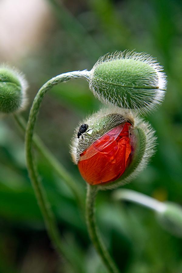 """фото """"Утро раннее"""" метки: природа, макро и крупный план, цветы"""