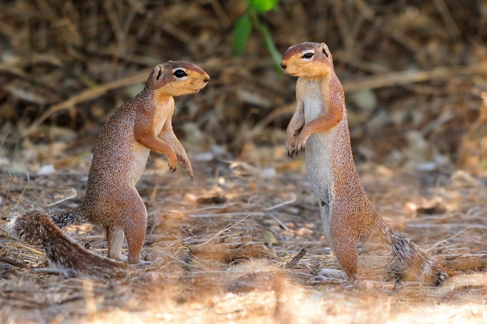 """фото """"По-соседски..."""" метки: природа, дикие животные"""