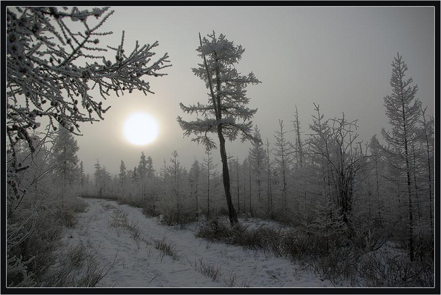 """фото """"Октябрь Заполярья"""" метки: пейзаж, зима, лес"""