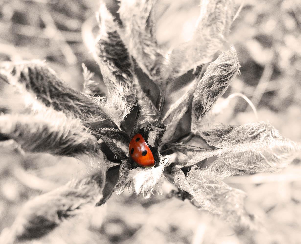 """фото """"flower"""" метки: макро и крупный план, природа, насекомое"""