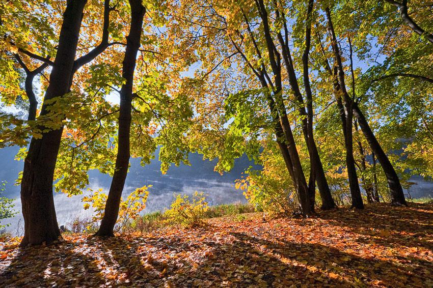 """фото """"Золотая осень в парке"""" метки: пейзаж, осень"""