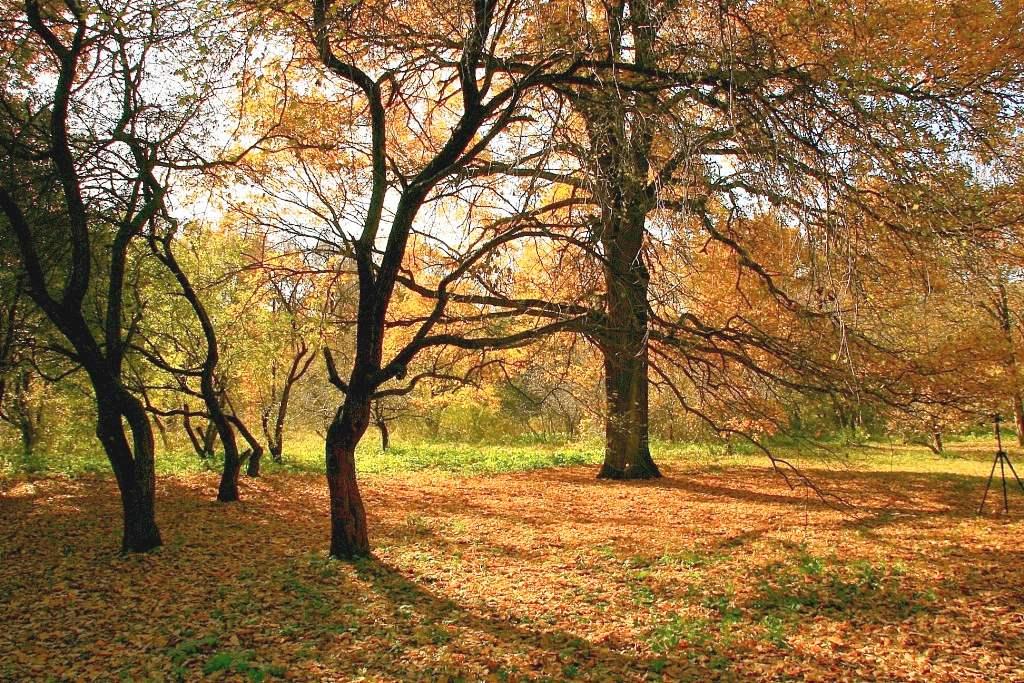 """фото """"фламенко (со штативом)"""" метки: пейзаж, лес, осень"""