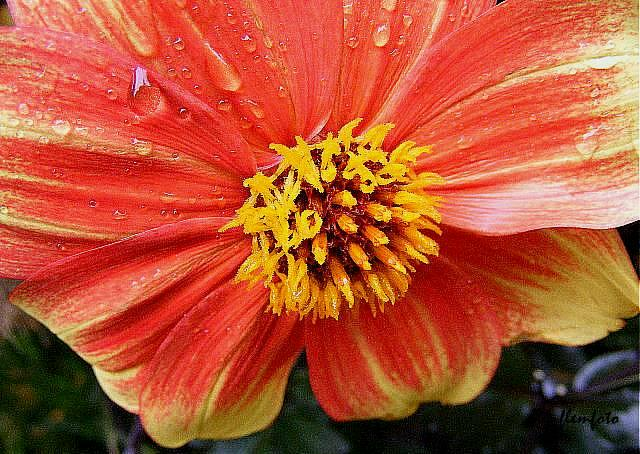 "фото ""Flower."" метки: природа,"
