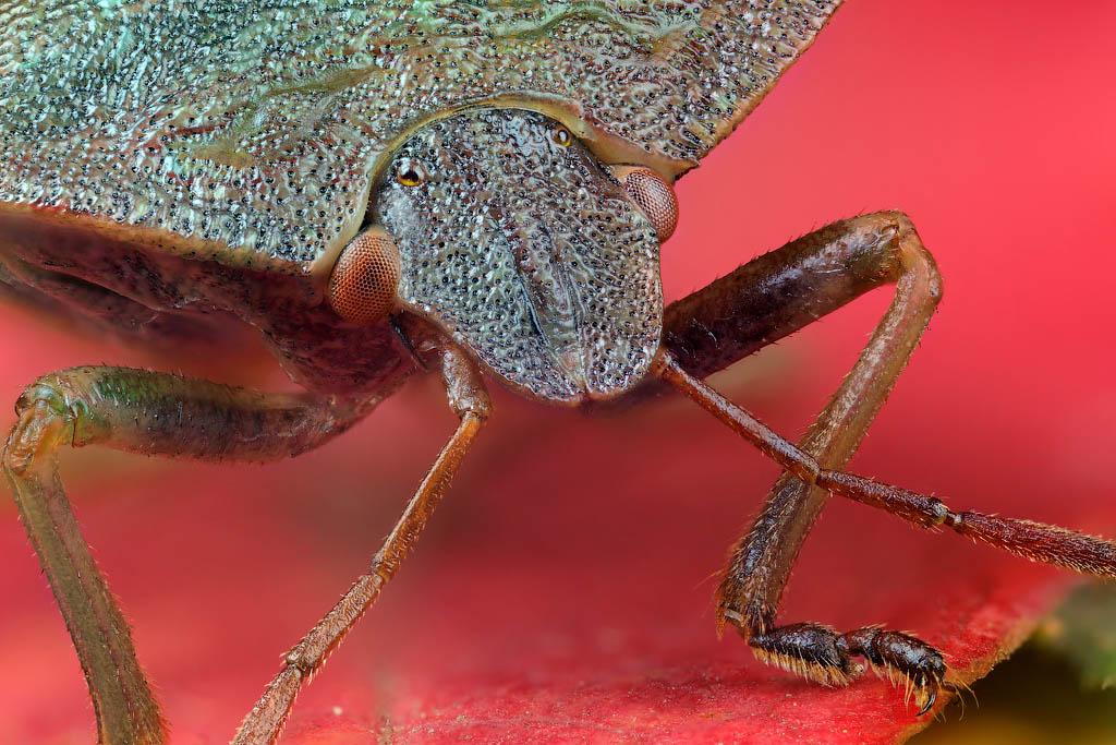"""фото """"Осень"""" метки: макро и крупный план, природа, насекомое"""