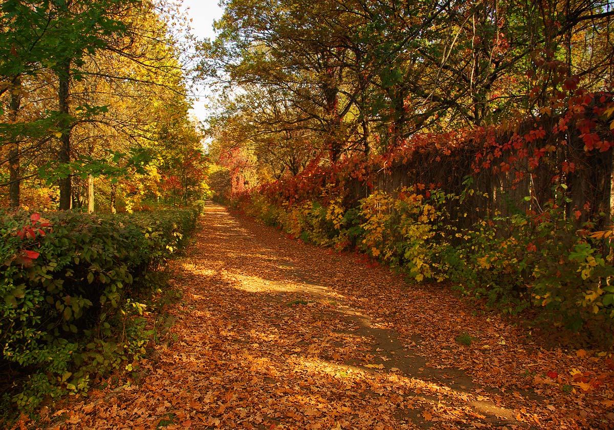 """фото """"Шагала осень по аллее..."""" метки: город, пейзаж, осень"""