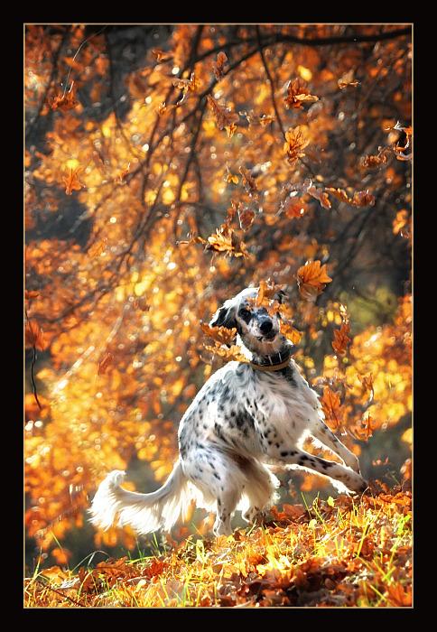 """фото """"Вот она какая осень...."""" метки: природа, домашние животные"""