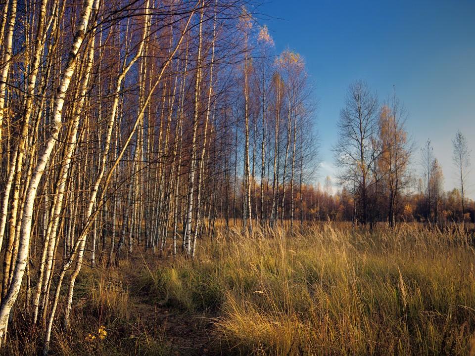 """фото """"Вечер в октябре"""" метки: пейзаж, осень"""