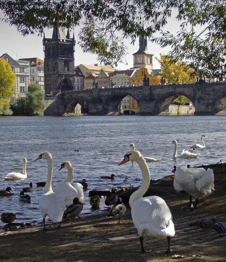 "фото ""Карлов мост"" метки: архитектура, путешествия, пейзаж, Европа"