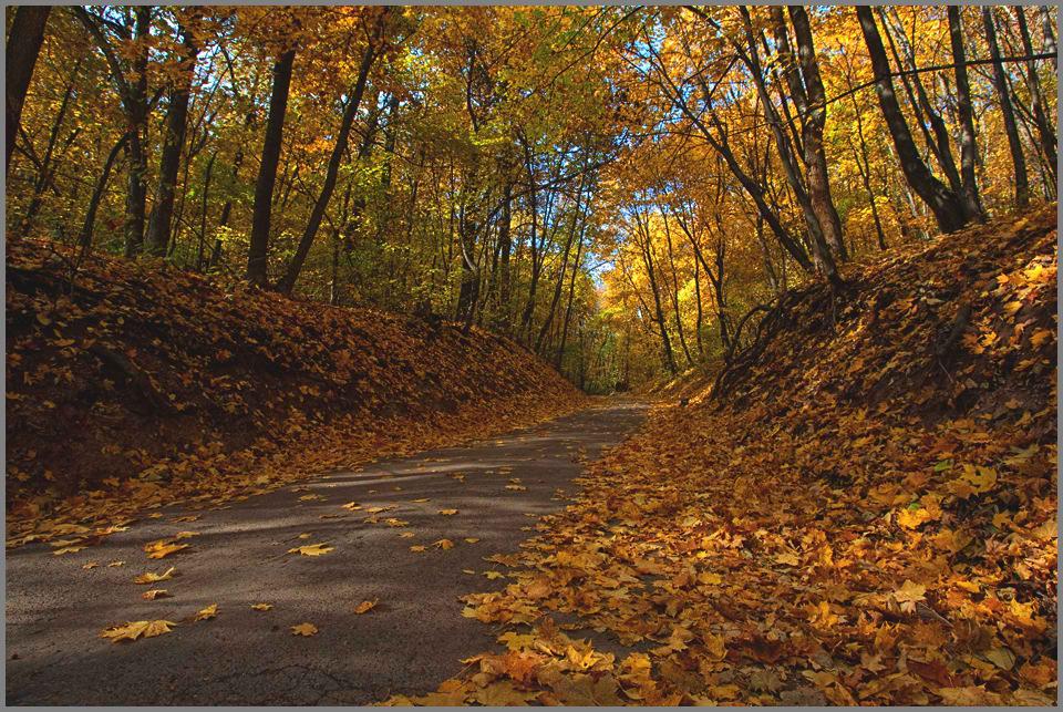 """фото """"Дорога в осень..."""" метки: пейзаж, осень"""