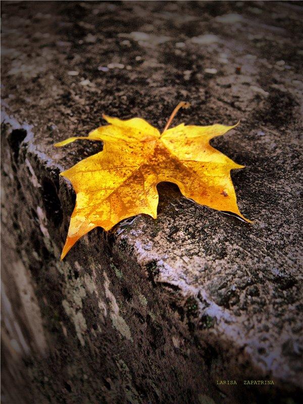 """фото """"Просто осень..."""" метки: ,"""