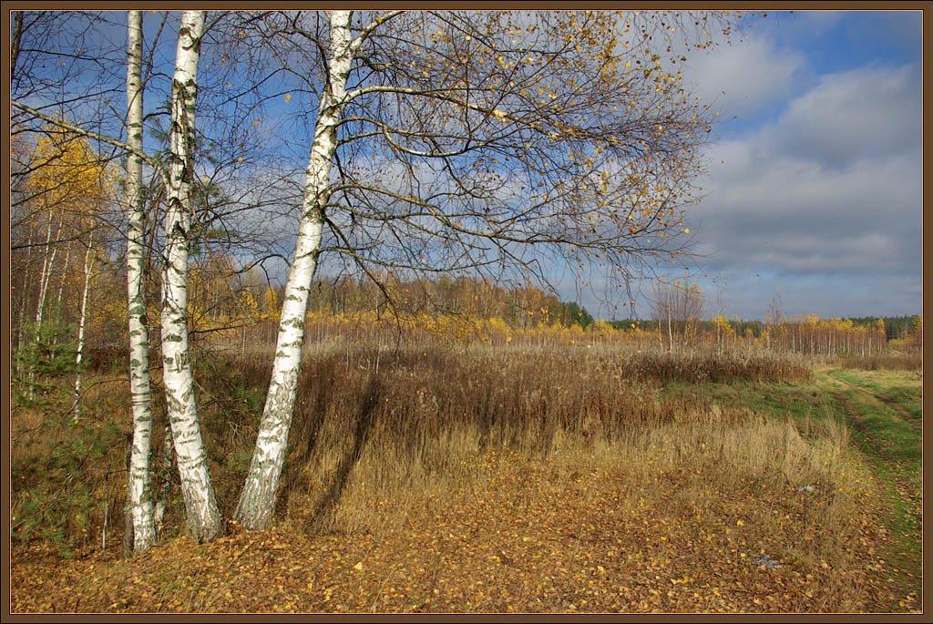 """фото """"Золотая осень средней полосы России"""" метки: пейзаж, лес, осень"""