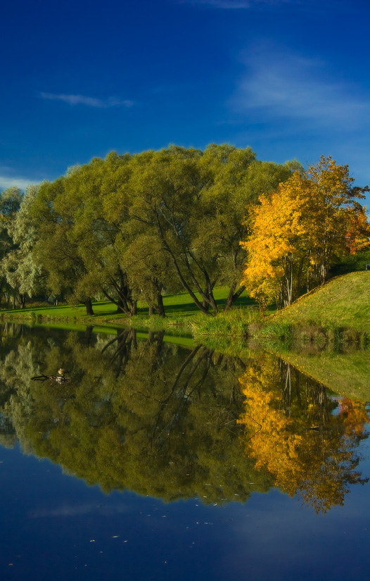 """фото """"Радостная осень"""" метки: пейзаж, осень"""