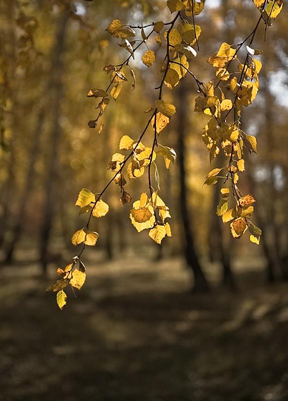 """фото """"Осеннее настроение."""" метки: пейзаж, осень"""