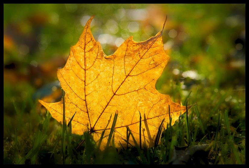 """фото """"October Gold"""" метки: макро и крупный план,"""