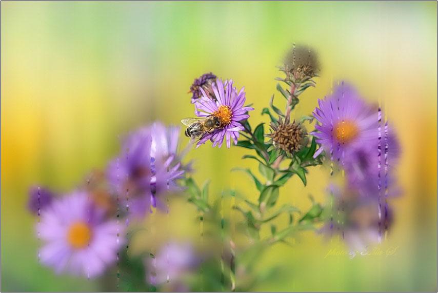 """фото """"Сквозь запотевшее стекло"""" метки: природа, цветы"""