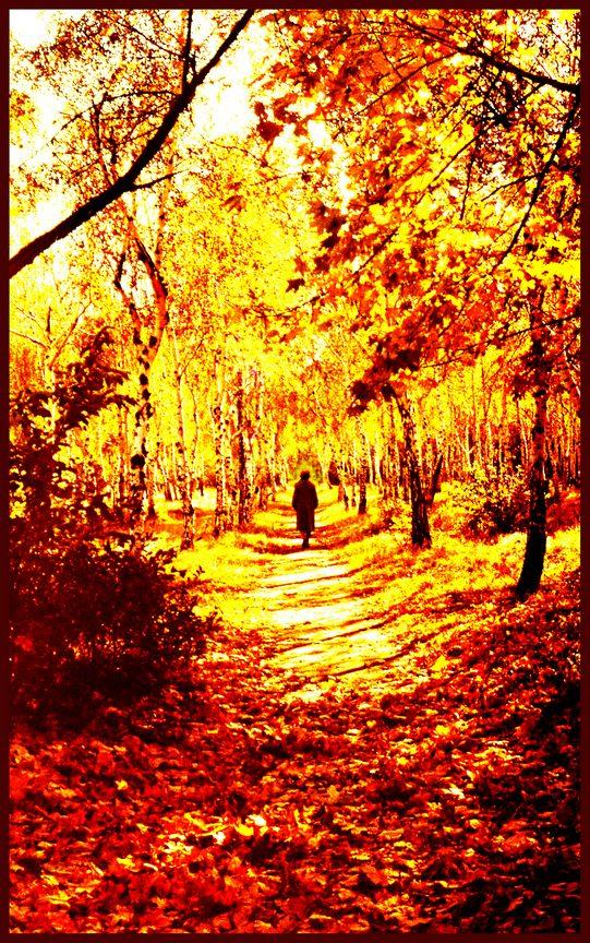"""фото """"Ушла !"""" метки: пейзаж, лес"""