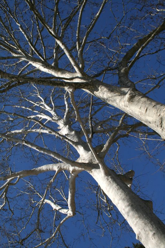 "фото ""skyward"" метки: природа, жанр,"